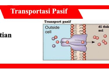 Transportasi-pasif-definisi-jenis-konsep-perbedaan